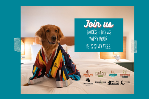 Pet Events at our Pet Friendly Hotels